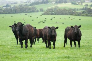 free roaming cattle 3d Valley farms